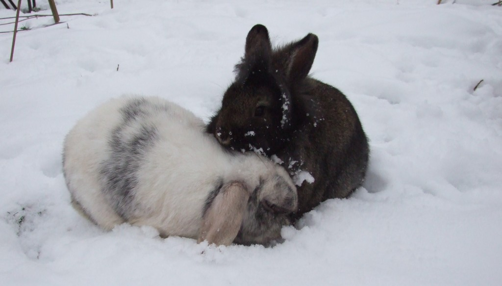 How Can I Make Sure My Rabbit Isn T Too Cold Or Too Hot