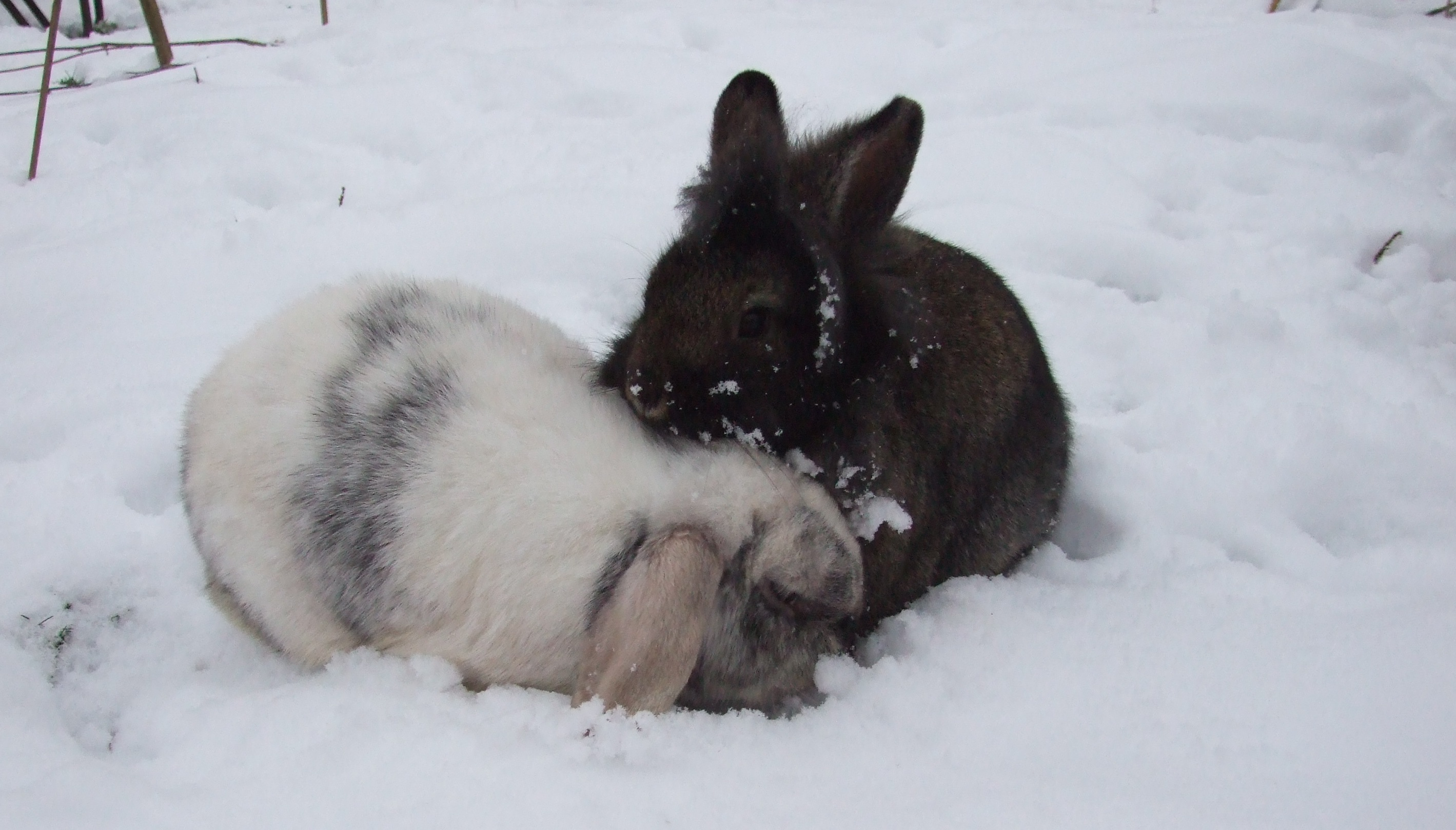 How Can I Make Sure My Rabbit Isn T Too Cold Or Too Hot Celia Haddon