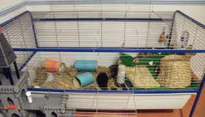 New Cage 2011 (11)