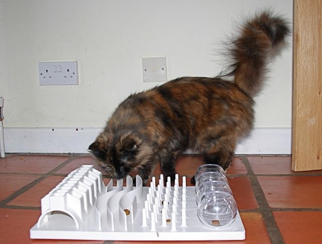 How to have a happy indoor cat environmental enrichment for Having an indoor cat