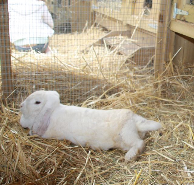 Rabbit Hutches And How To Choose Which Bedding Celia