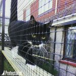 protectapet-cat-fence
