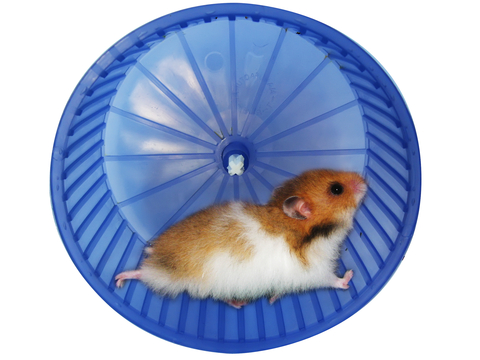 http://www.dreamstime.com/stock-photo-hamster-wheel-image5329240