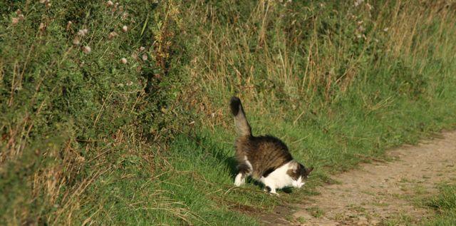 Last Resort Cat Spraying