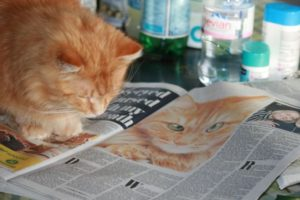 toby reading